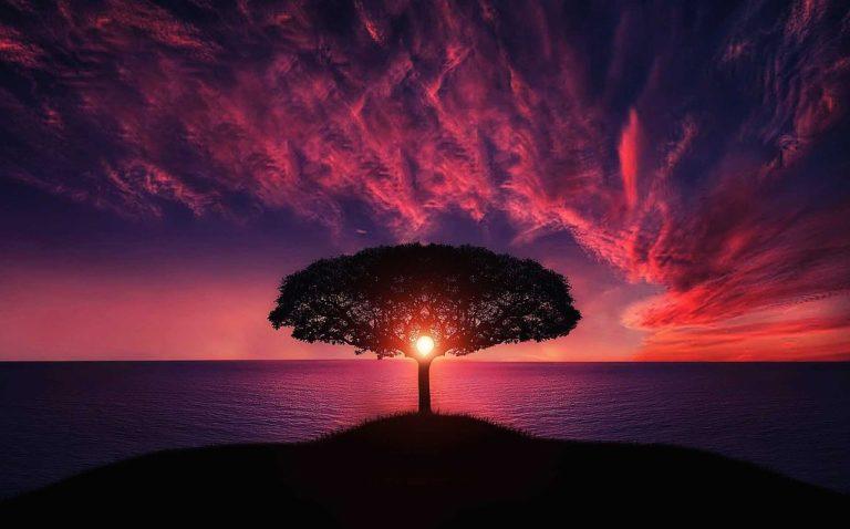arbre coucher soleil